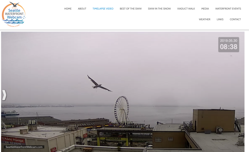 Seattle Waterfront Webcam Single Seagull Soaring Above The Seattle Great Wheel
