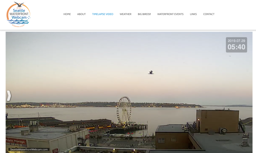 Seattle Waterfront Webcam Bird in Flight Before Dawn 07 2019