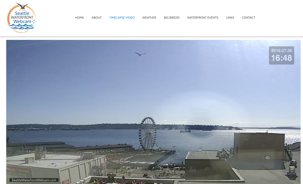 Seattle Waterfront Webcam Single Seagull Soaring Above Seattle
