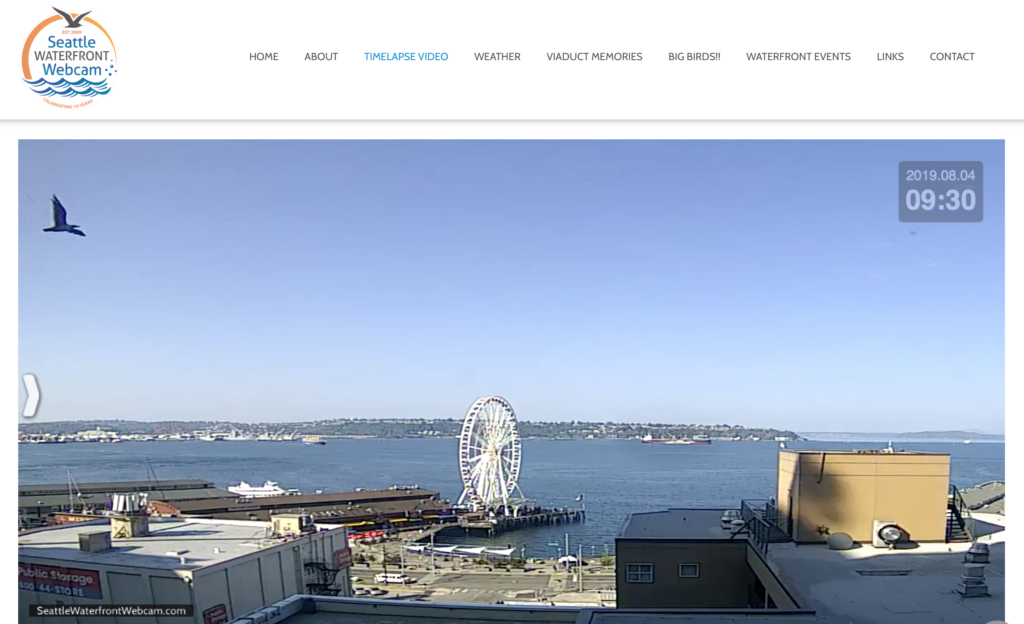 Seattle Waterfront Webcam Big Seagull Flying Across the Cam August 2019